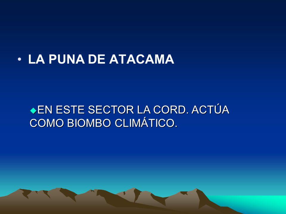 LA PUNA DE ATACAMA EN ESTE SECTOR LA CORD. ACTÚA COMO BIOMBO CLIMÁTICO.