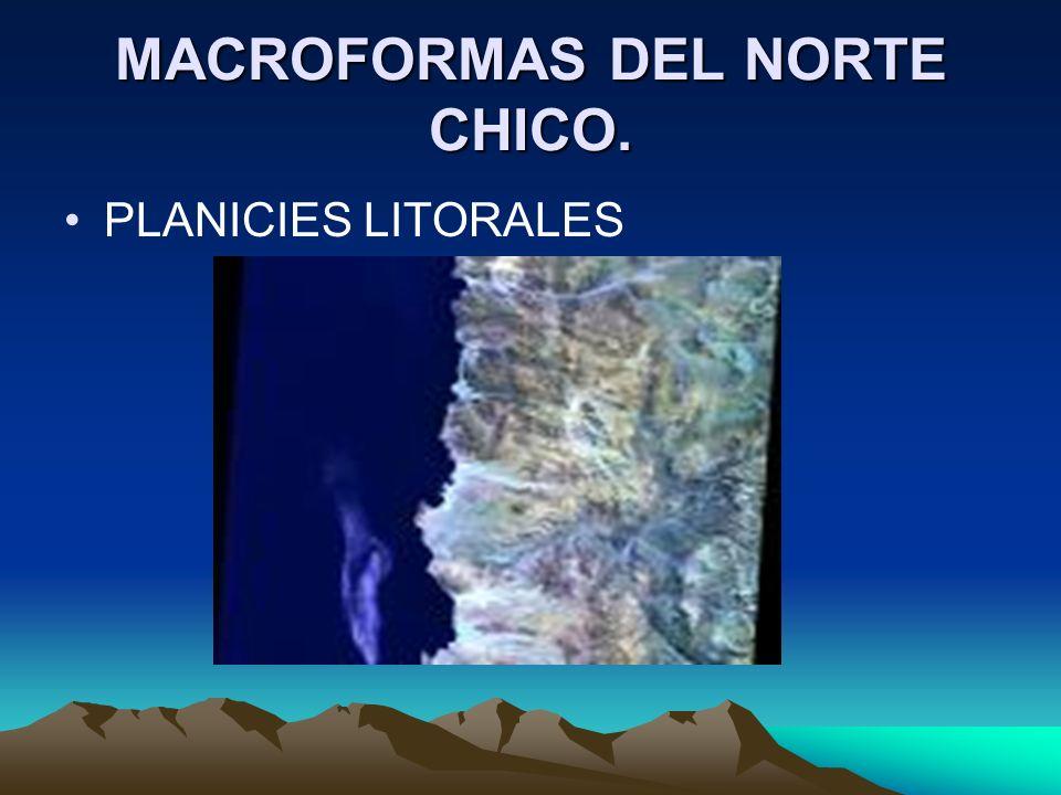 MACROFORMAS DEL NORTE CHICO.