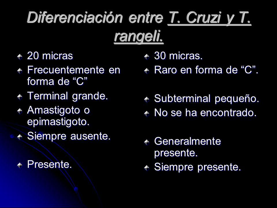 Diferenciación entre T. Cruzi y T. rangeli.