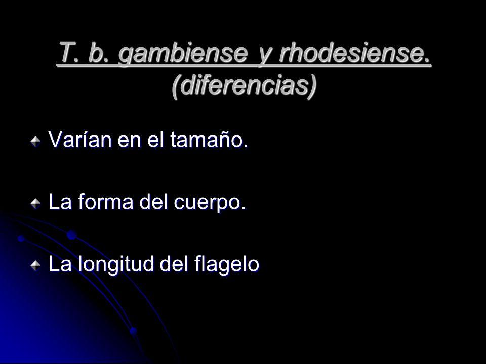 T. b. gambiense y rhodesiense. (diferencias)