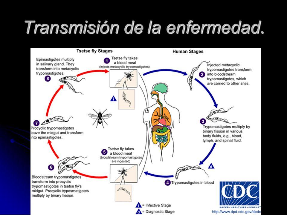 Transmisión de la enfermedad.