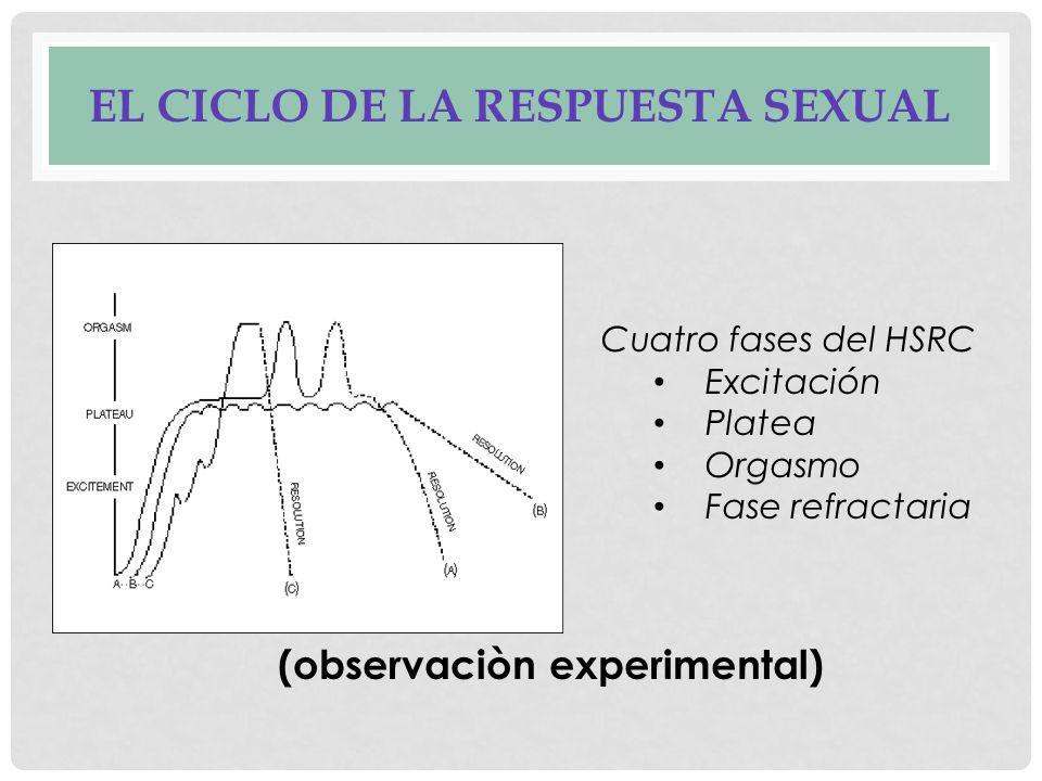 EL CICLO DE LA RESPUESTA SEXUAL