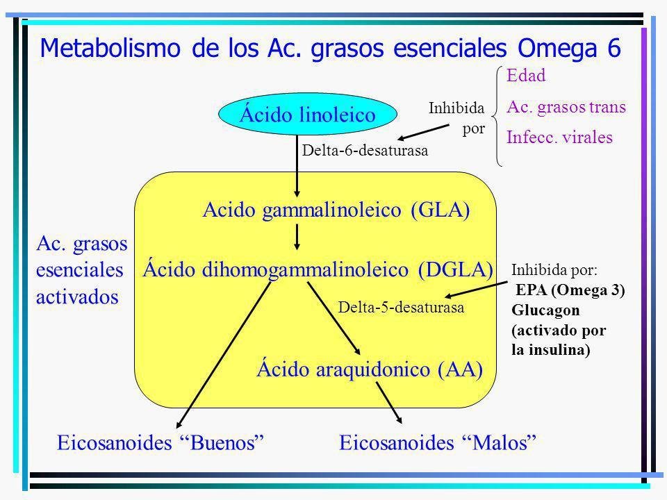 Metabolismo de los Ac. grasos esenciales Omega 6
