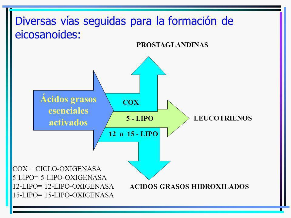 Diversas vías seguidas para la formación de eicosanoides: