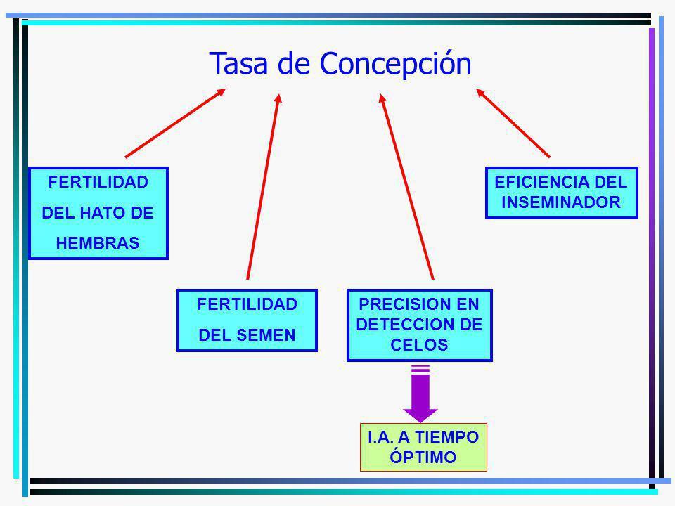 Tasa de Concepción FERTILIDAD DEL HATO DE HEMBRAS EFICIENCIA DEL