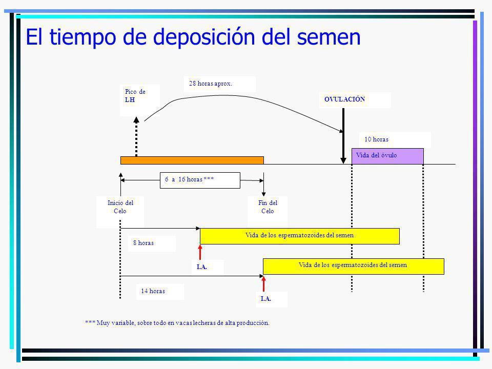 El tiempo de deposición del semen