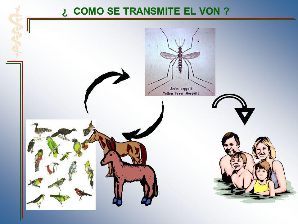 ¿ COMO SE TRANSMITE EL VON