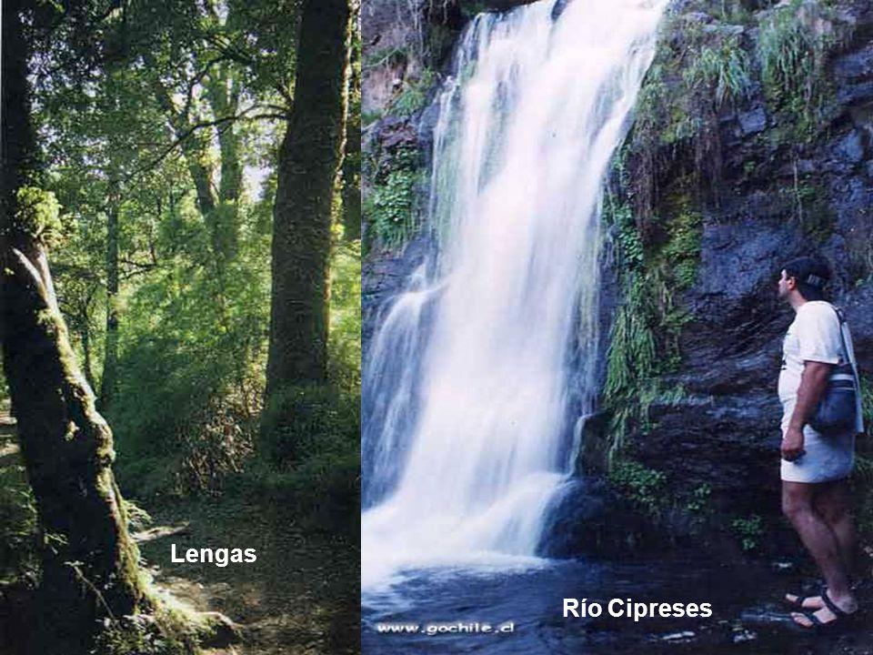 Lengas Río Cipreses