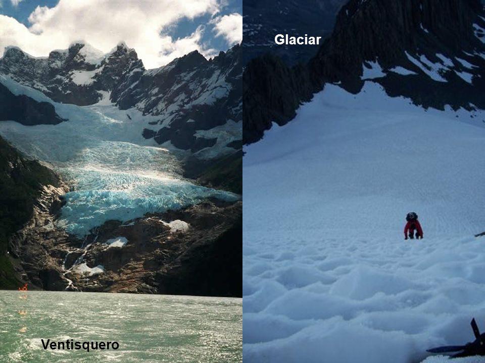 Glaciar Fauna Introducida Ventisquero