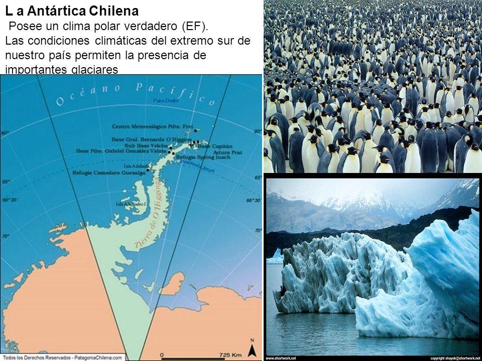 L a Antártica Chilena Posee un clima polar verdadero (EF).