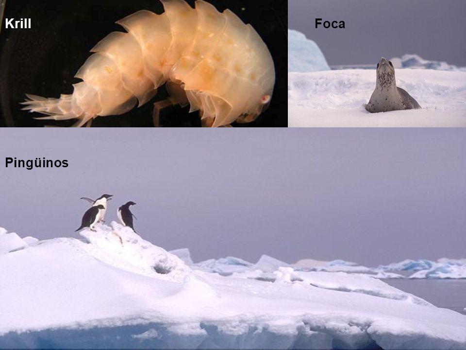 Krill Foca Pingüinos