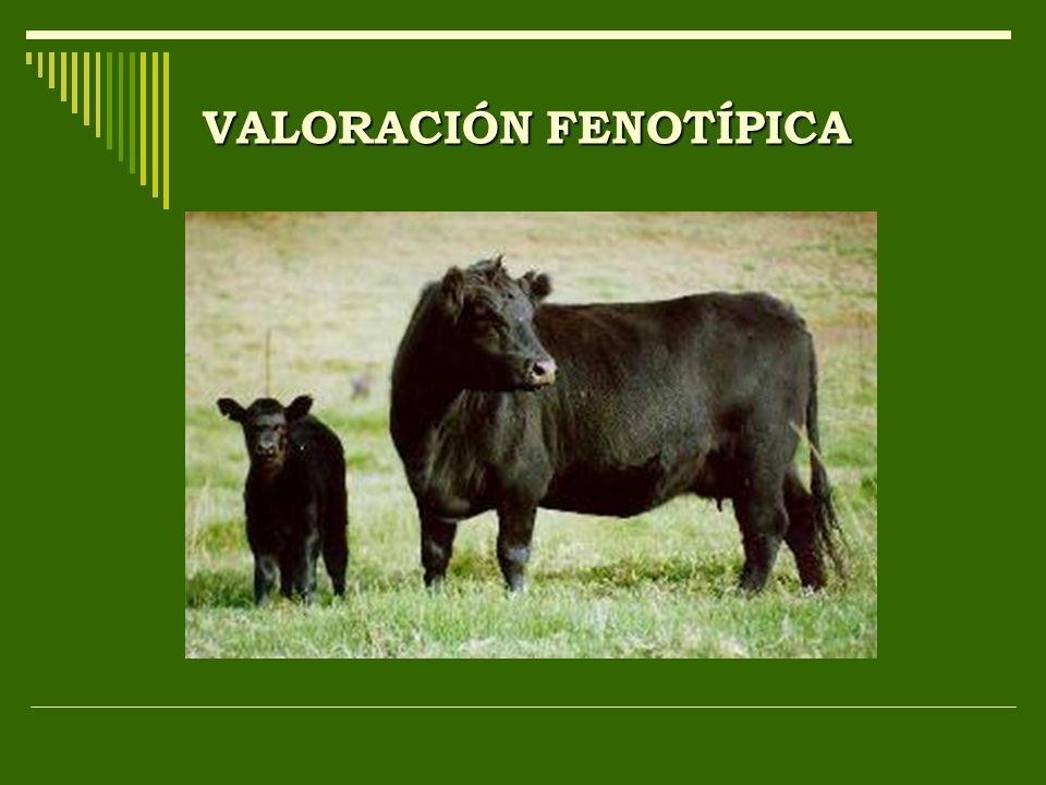 VALORACIÓN FENOTÍPICA