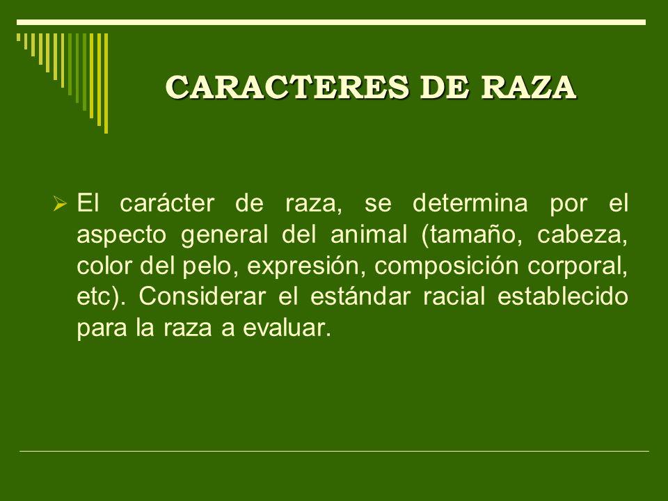 CARACTERES DE RAZA