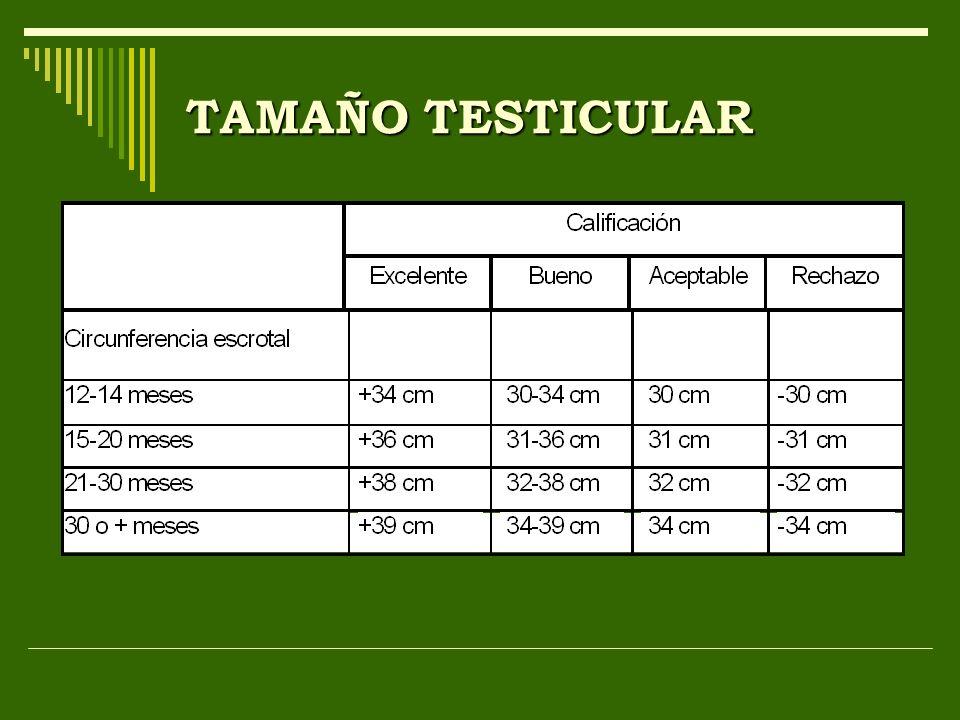 TAMAÑO TESTICULAR
