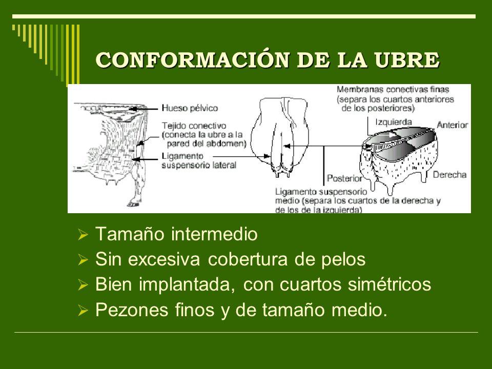 CONFORMACIÓN DE LA UBRE