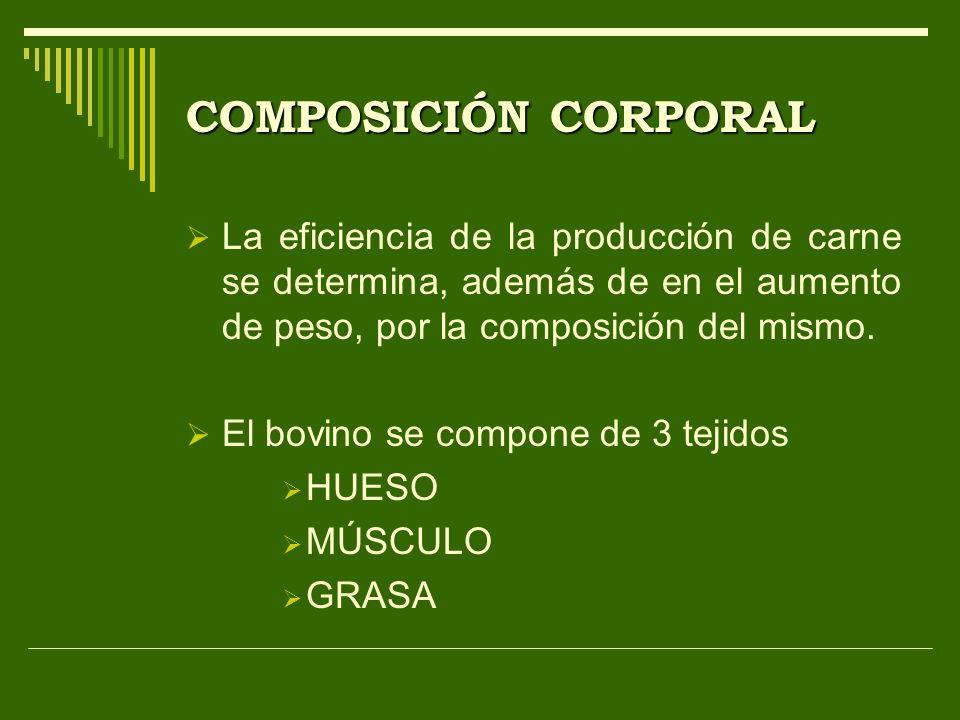 COMPOSICIÓN CORPORAL La eficiencia de la producción de carne se determina, además de en el aumento de peso, por la composición del mismo.