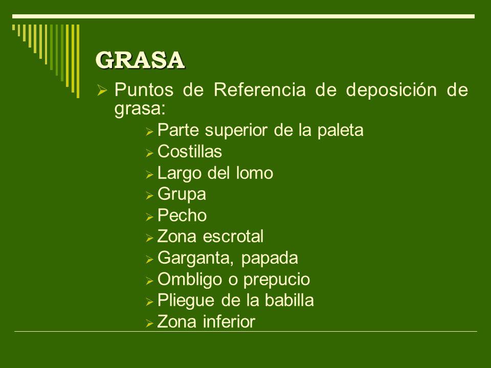 GRASA Puntos de Referencia de deposición de grasa: