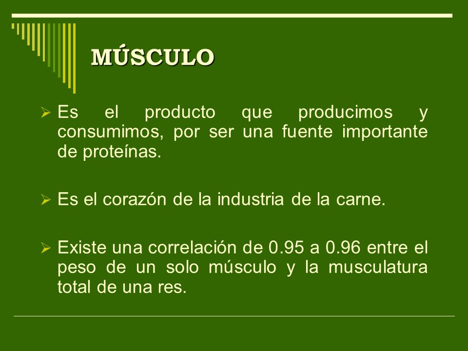 MÚSCULO Es el producto que producimos y consumimos, por ser una fuente importante de proteínas. Es el corazón de la industria de la carne.