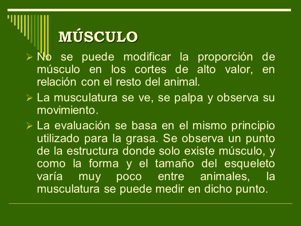 MÚSCULO No se puede modificar la proporción de músculo en los cortes de alto valor, en relación con el resto del animal.
