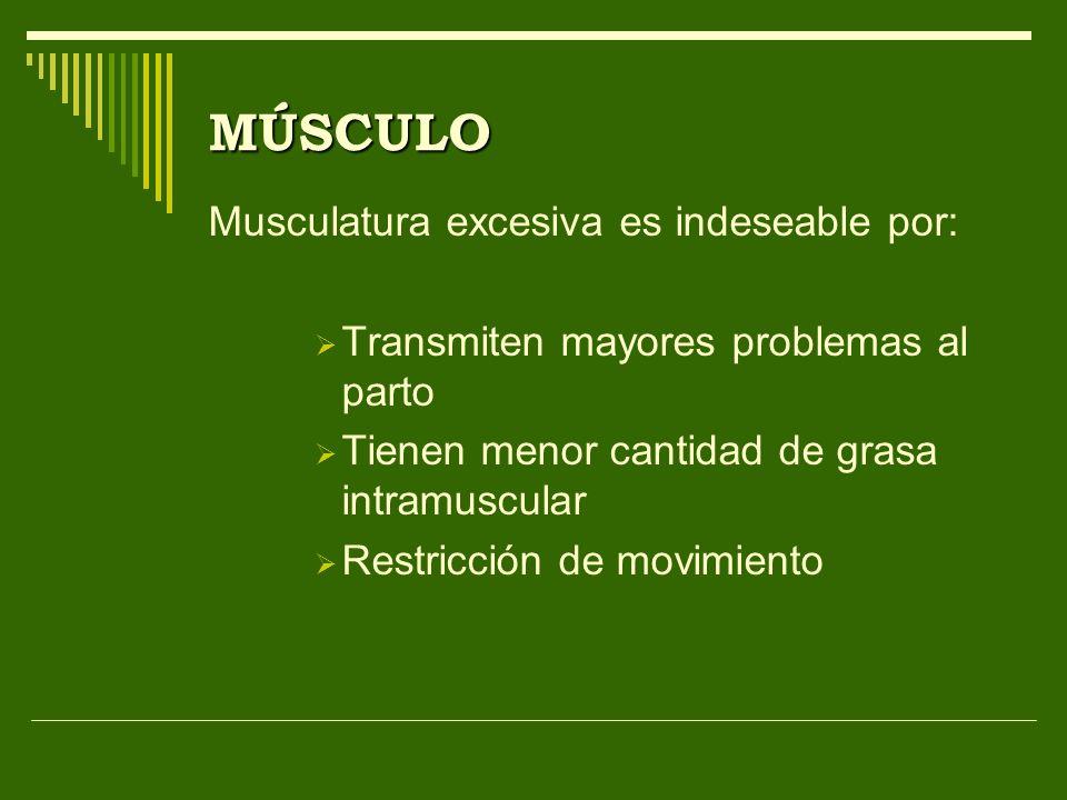 MÚSCULO Musculatura excesiva es indeseable por: