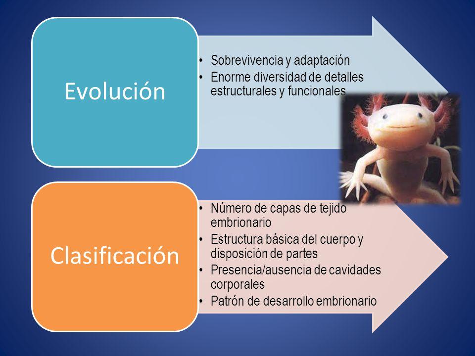 Evolución Sobrevivencia y adaptación. Enorme diversidad de detalles estructurales y funcionales. Clasificación.
