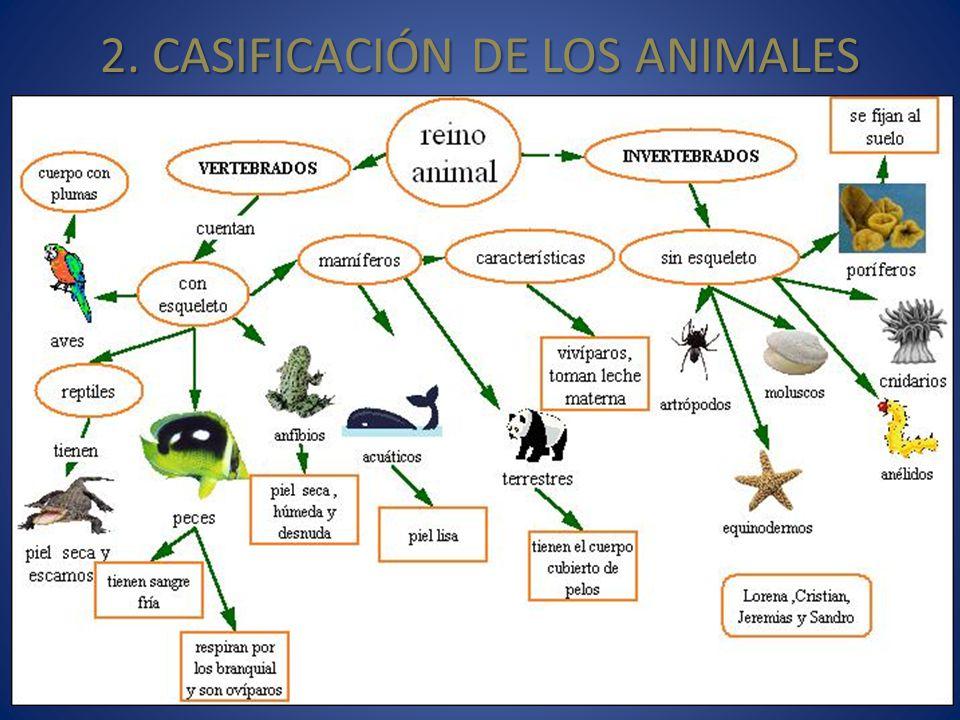 2. CASIFICACIÓN DE LOS ANIMALES