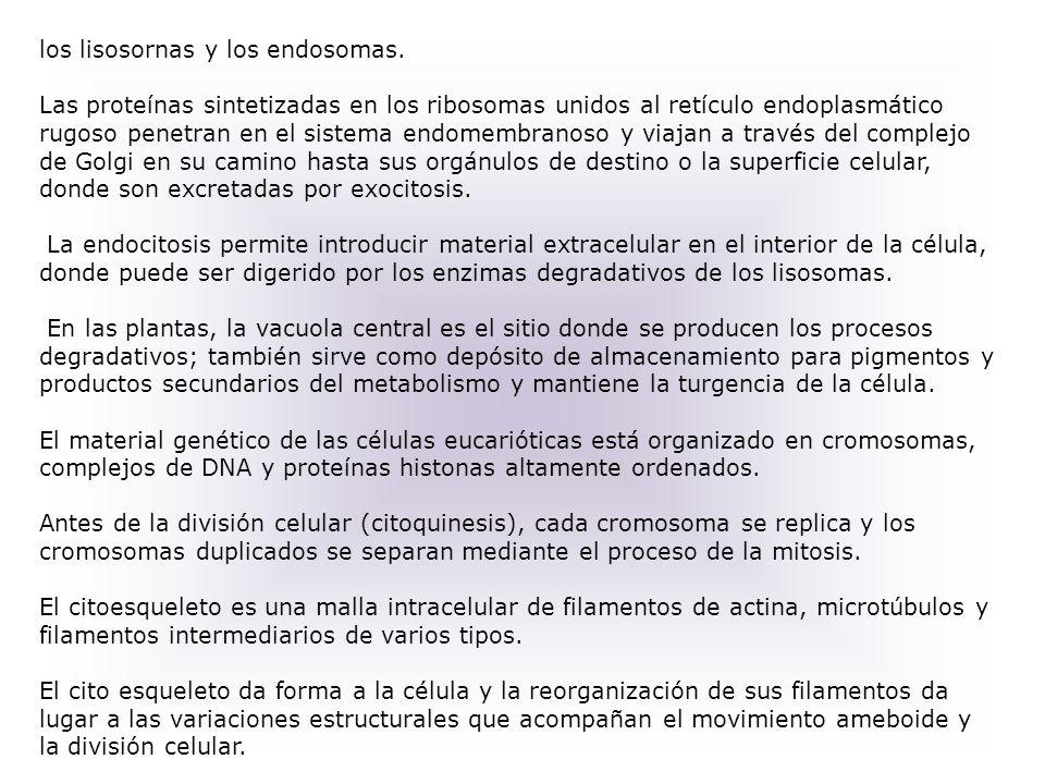 los lisosornas y los endosomas.