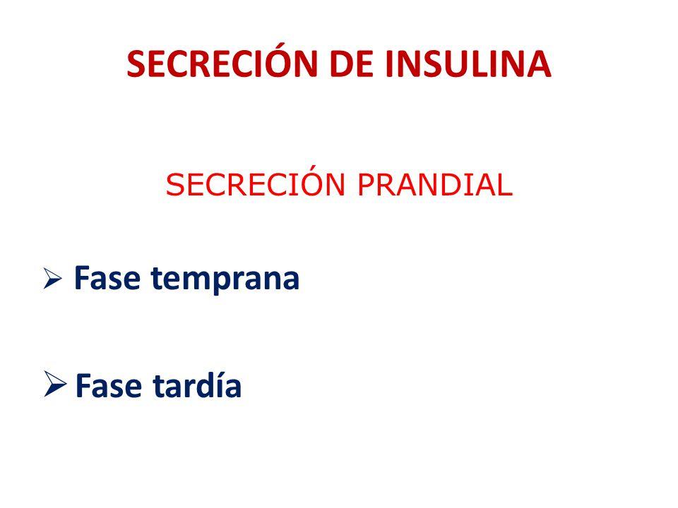 SECRECIÓN DE INSULINA SECRECIÓN PRANDIAL Fase temprana Fase tardía