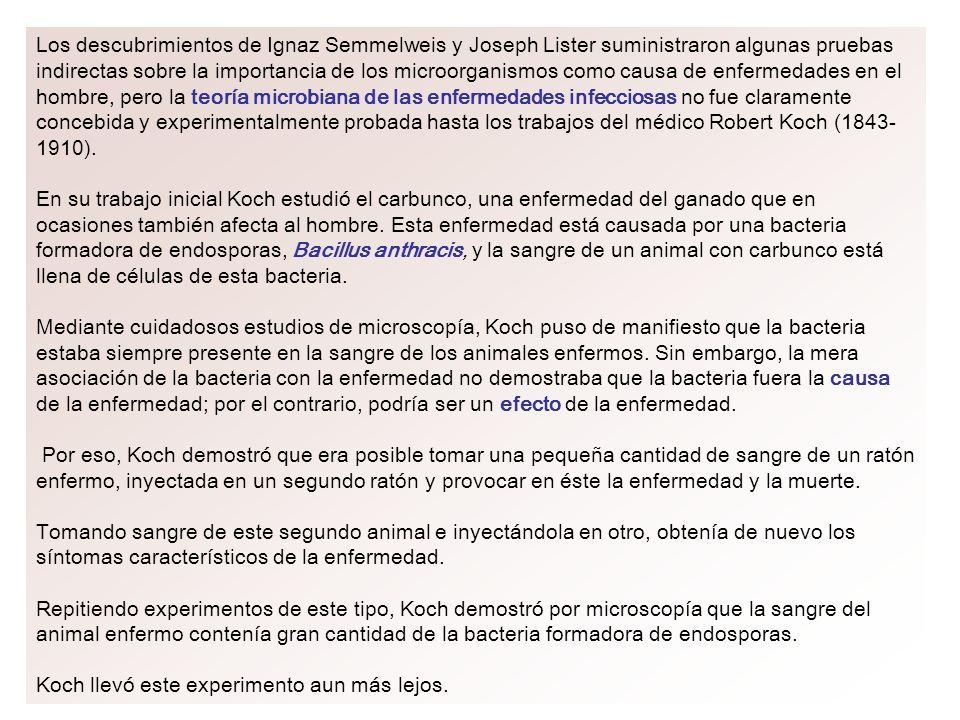 Los descubrimientos de Ignaz Semmelweis y Joseph Lister suministraron algunas pruebas indirectas sobre la importancia de los microorganismos como causa de enfermedades en el hombre, pero la teoría microbiana de las enfermedades infecciosas no fue claramente concebida y experimentalmente probada hasta los trabajos del médico Robert Koch (1843-1910).