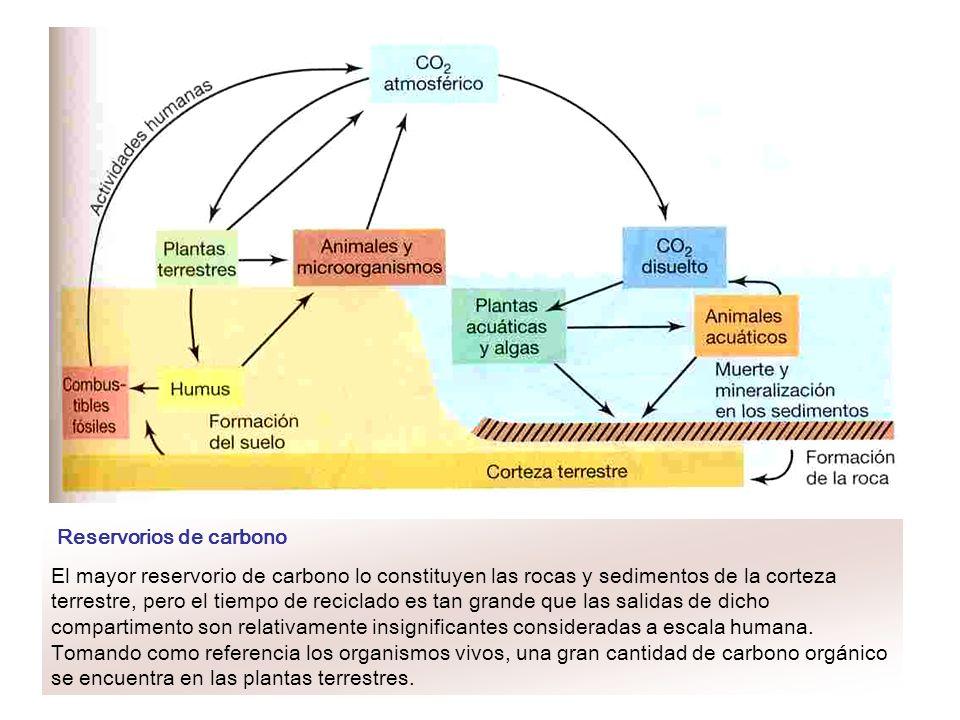 Reservorios de carbono