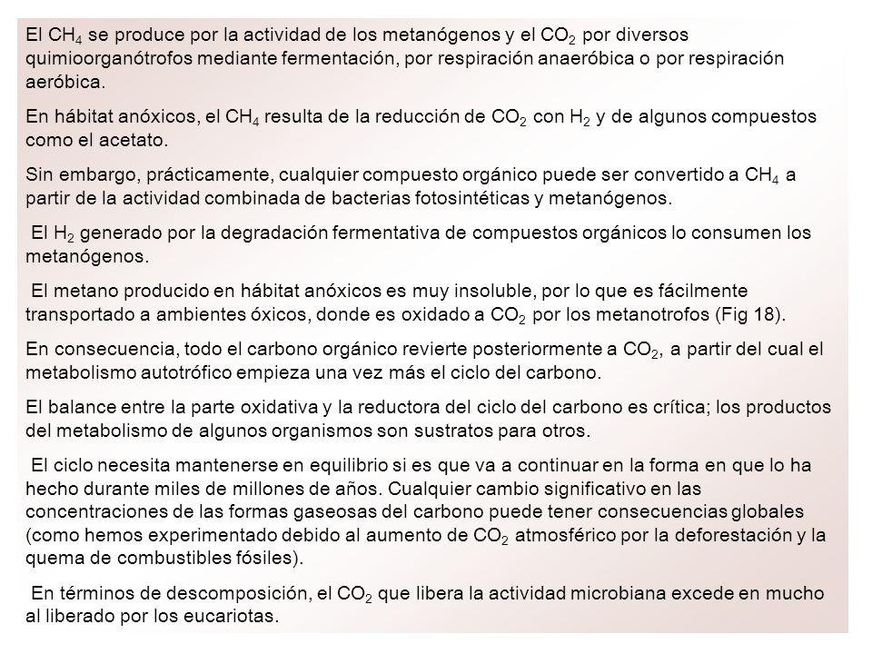 El CH4 se produce por la actividad de los metanógenos y el CO2 por diversos quimioorganótrofos mediante fermentación, por respiración anaeróbica o por respiración aeróbica.