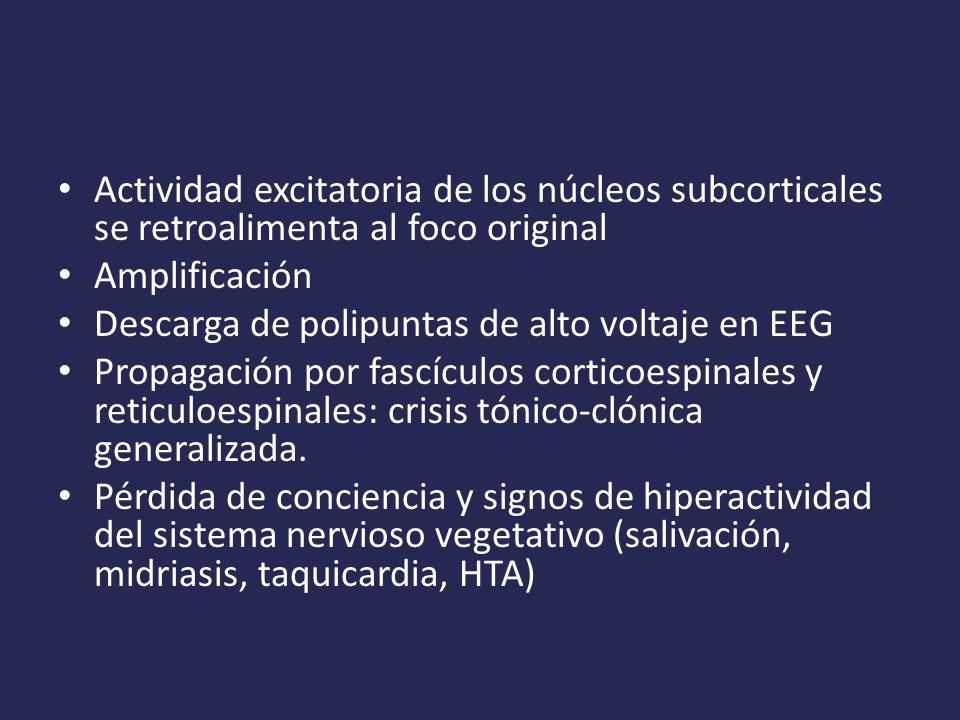 Actividad excitatoria de los núcleos subcorticales se retroalimenta al foco original