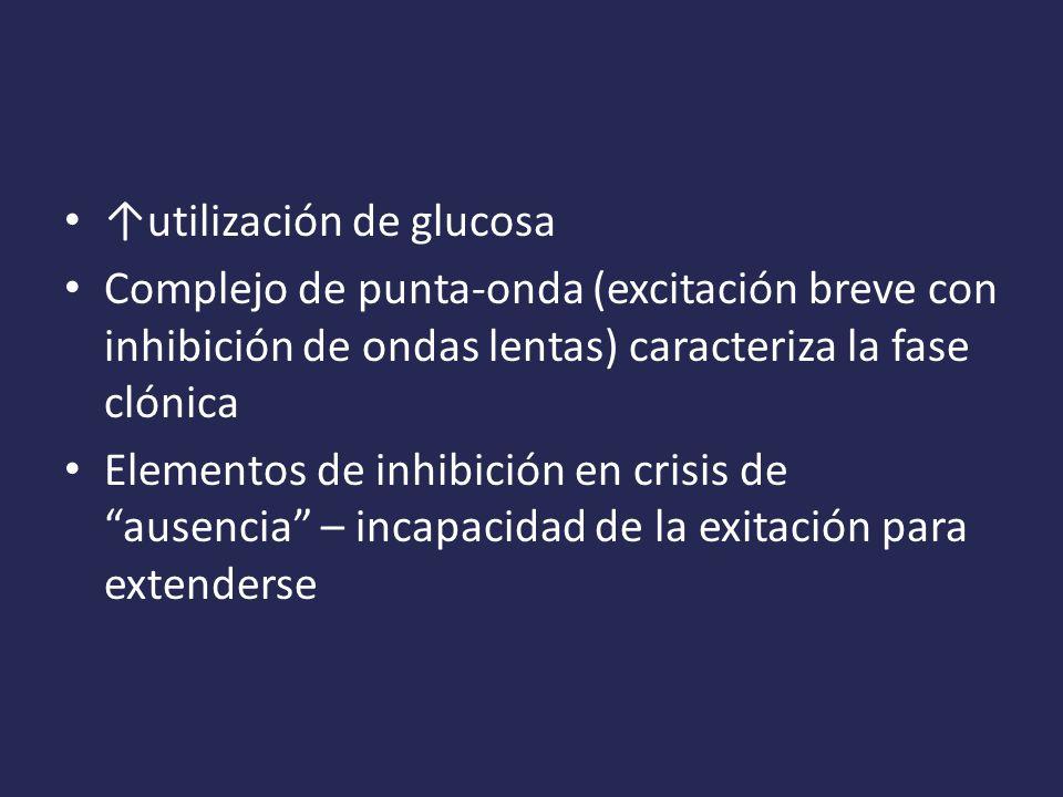 ↑utilización de glucosa
