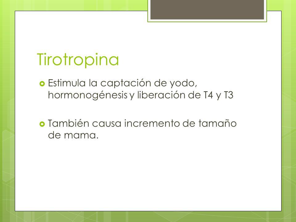 Tirotropina Estimula la captación de yodo, hormonogénesis y liberación de T4 y T3.