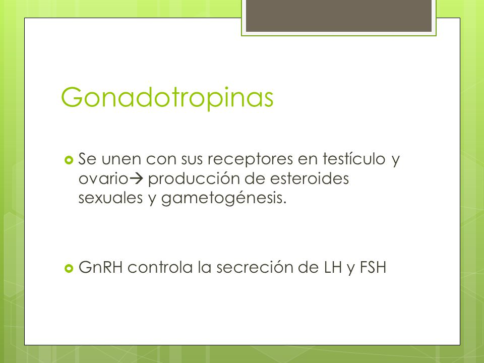 Gonadotropinas Se unen con sus receptores en testículo y ovario producción de esteroides sexuales y gametogénesis.