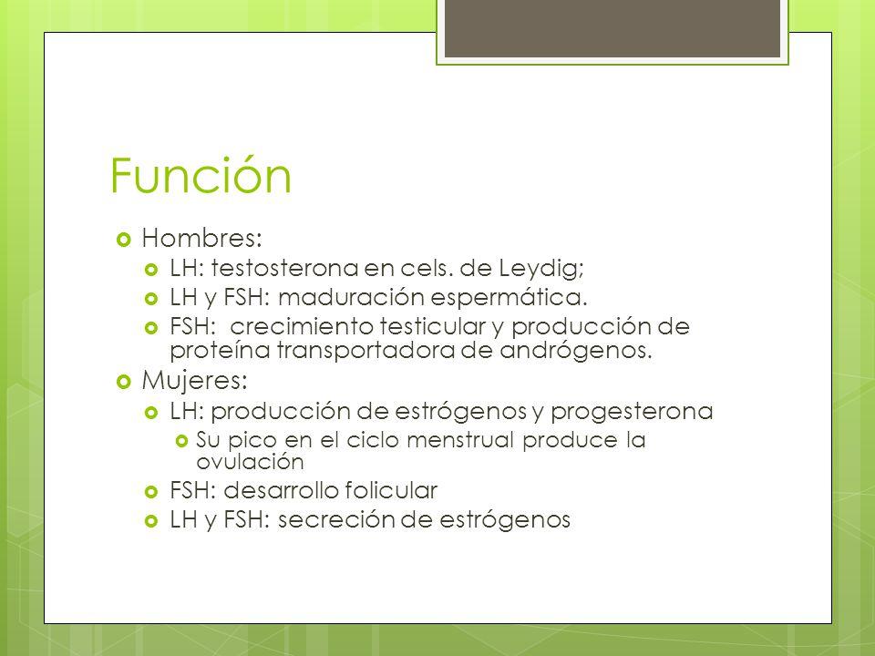 Función Hombres: Mujeres: LH: testosterona en cels. de Leydig;