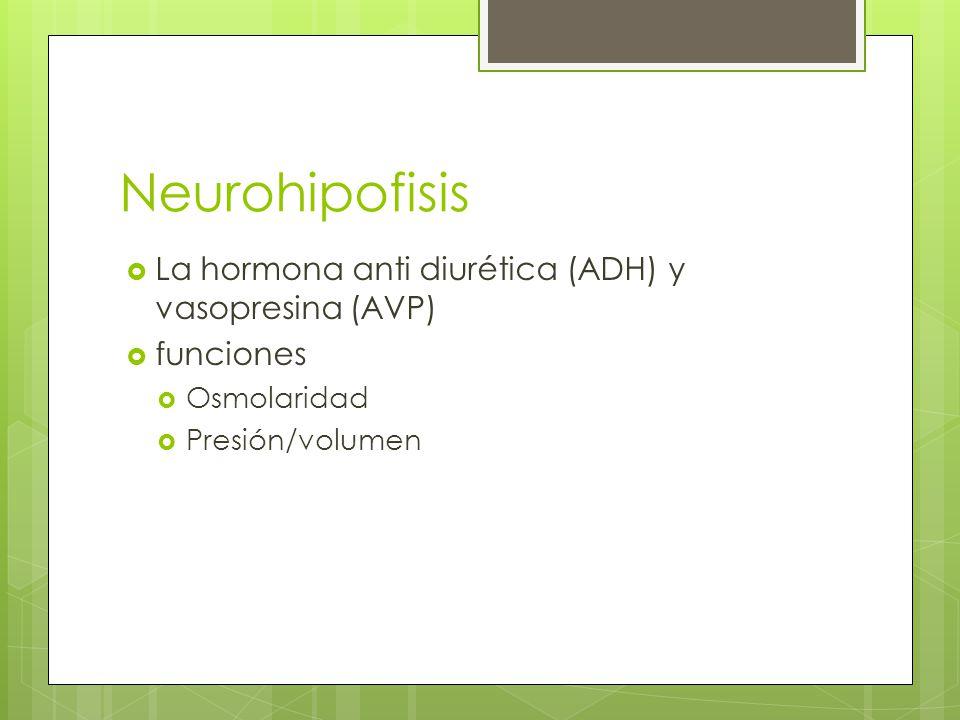 Neurohipofisis La hormona anti diurética (ADH) y vasopresina (AVP)
