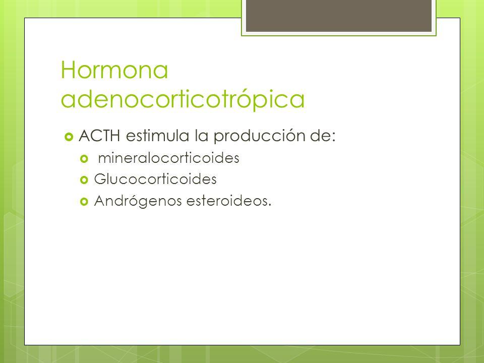 Hormona adenocorticotrópica