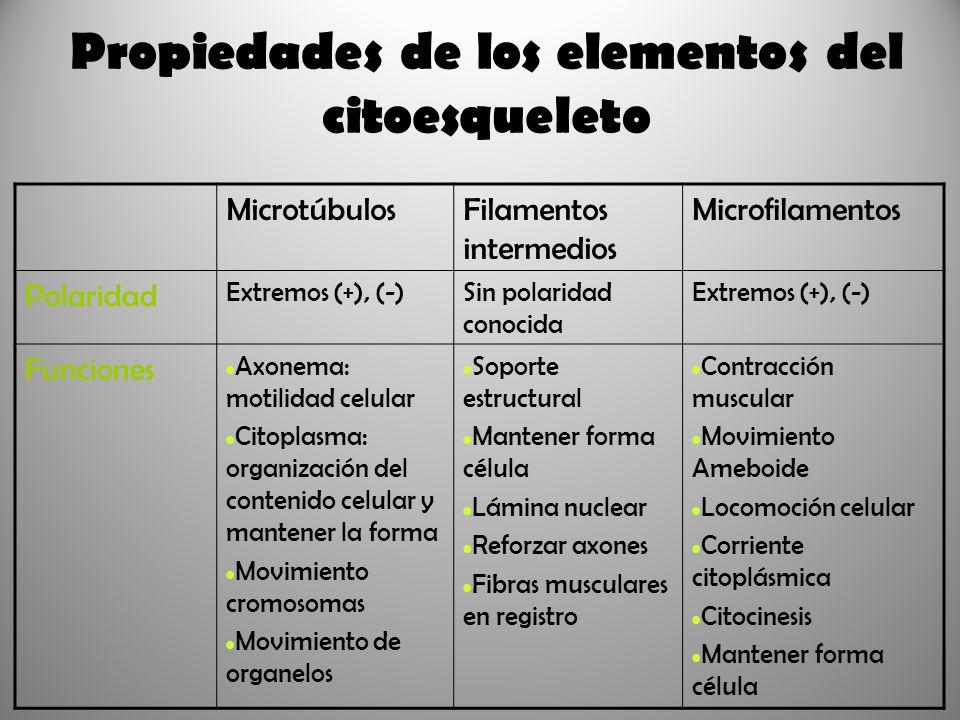Propiedades de los elementos del citoesqueleto