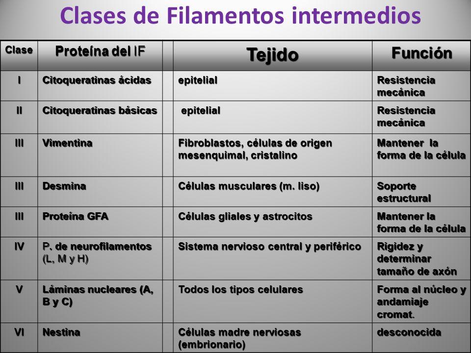 Clases de Filamentos intermedios
