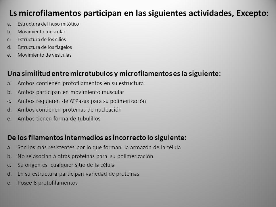Ls microfilamentos participan en las siguientes actividades, Excepto: