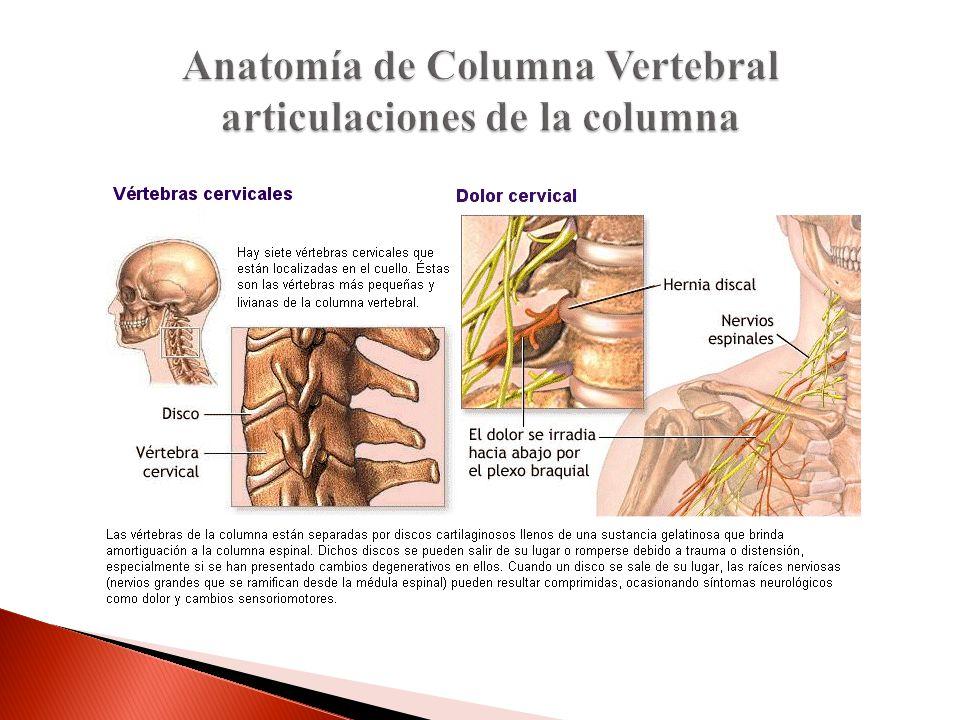 Anatomía de Columna Vertebral articulaciones de la columna