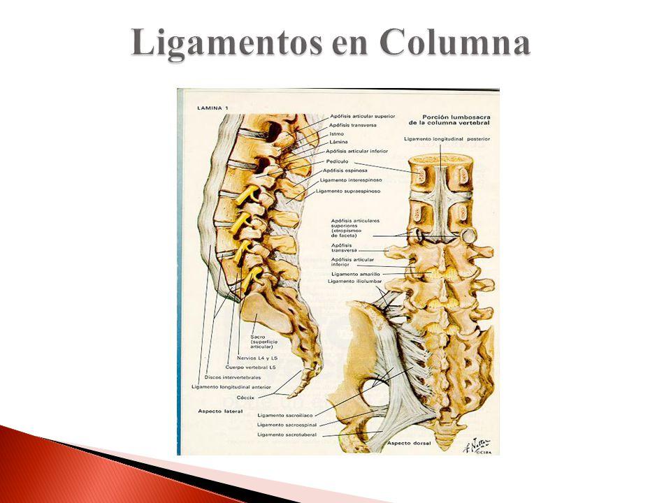 Ligamentos en Columna