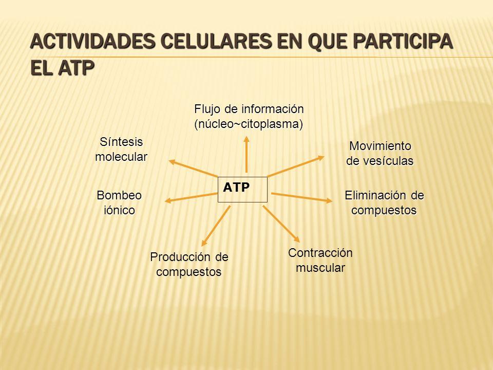 Actividades celulares en que participa el ATP