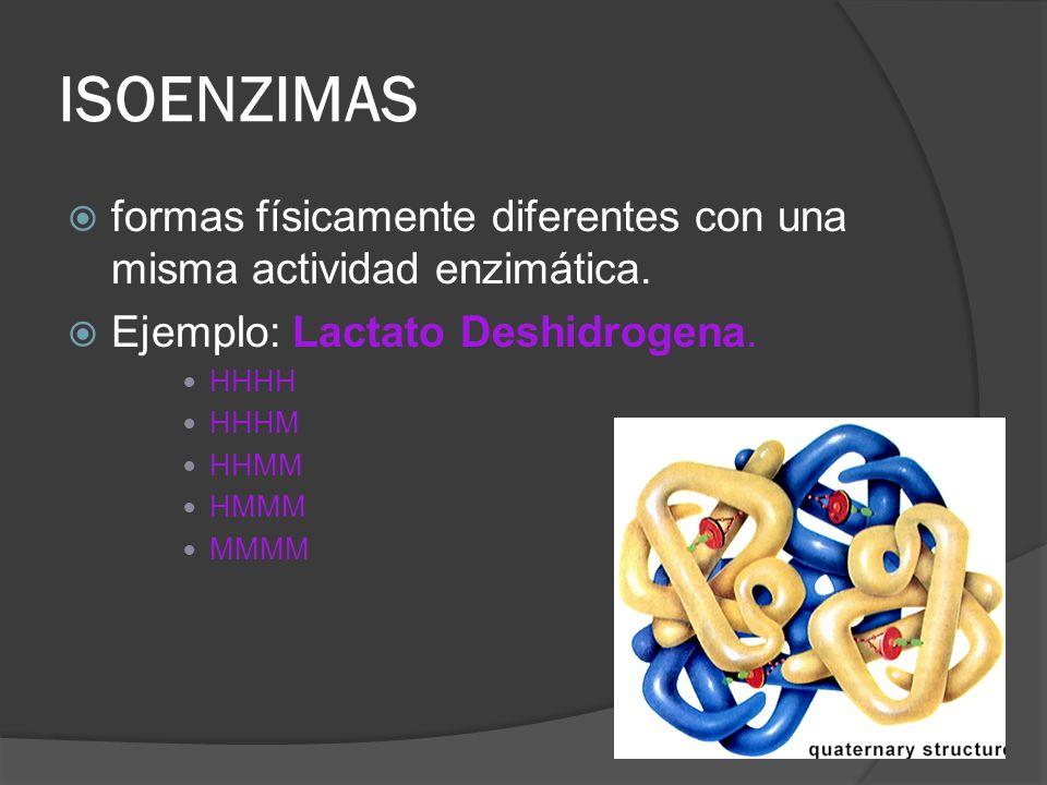 ISOENZIMASformas físicamente diferentes con una misma actividad enzimática. Ejemplo: Lactato Deshidrogena.