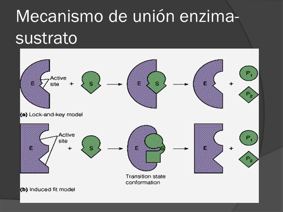 Mecanismo de unión enzima-sustrato