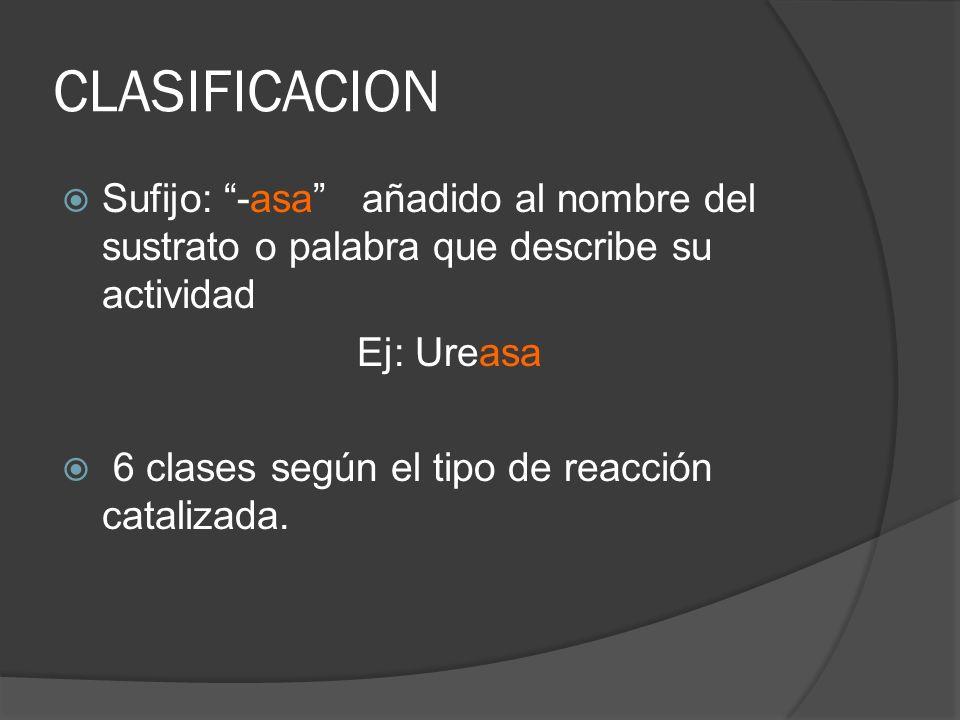 CLASIFICACION Sufijo: -asa añadido al nombre del sustrato o palabra que describe su actividad. Ej: Ureasa.