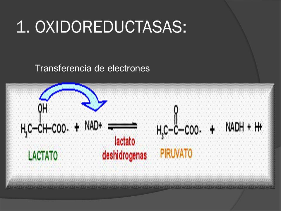1. OXIDOREDUCTASAS: Transferencia de electrones