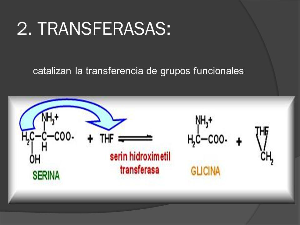catalizan la transferencia de grupos funcionales