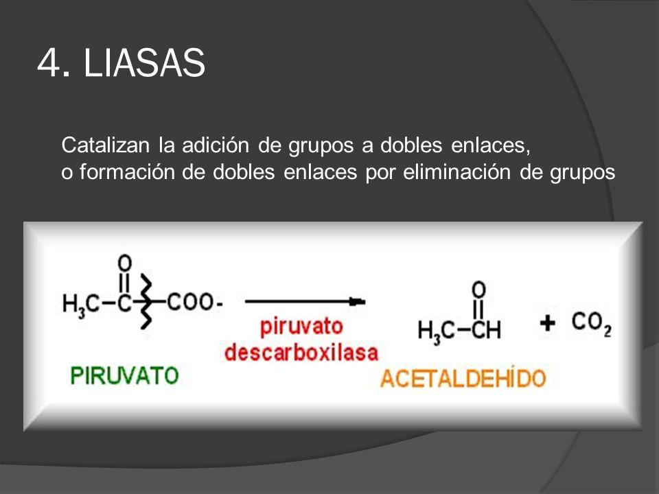 4. LIASAS Catalizan la adición de grupos a dobles enlaces,